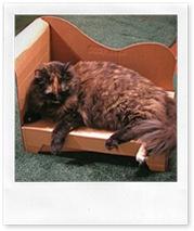 chaise long in cartone, per gatti