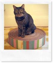 ancora cartone da imballaggio come cuccia per gatti